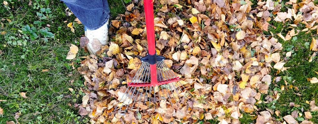 Neighbors Helping Neighbors raking leaves